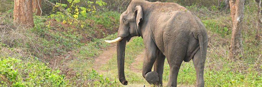 Man-Elephant Conflict